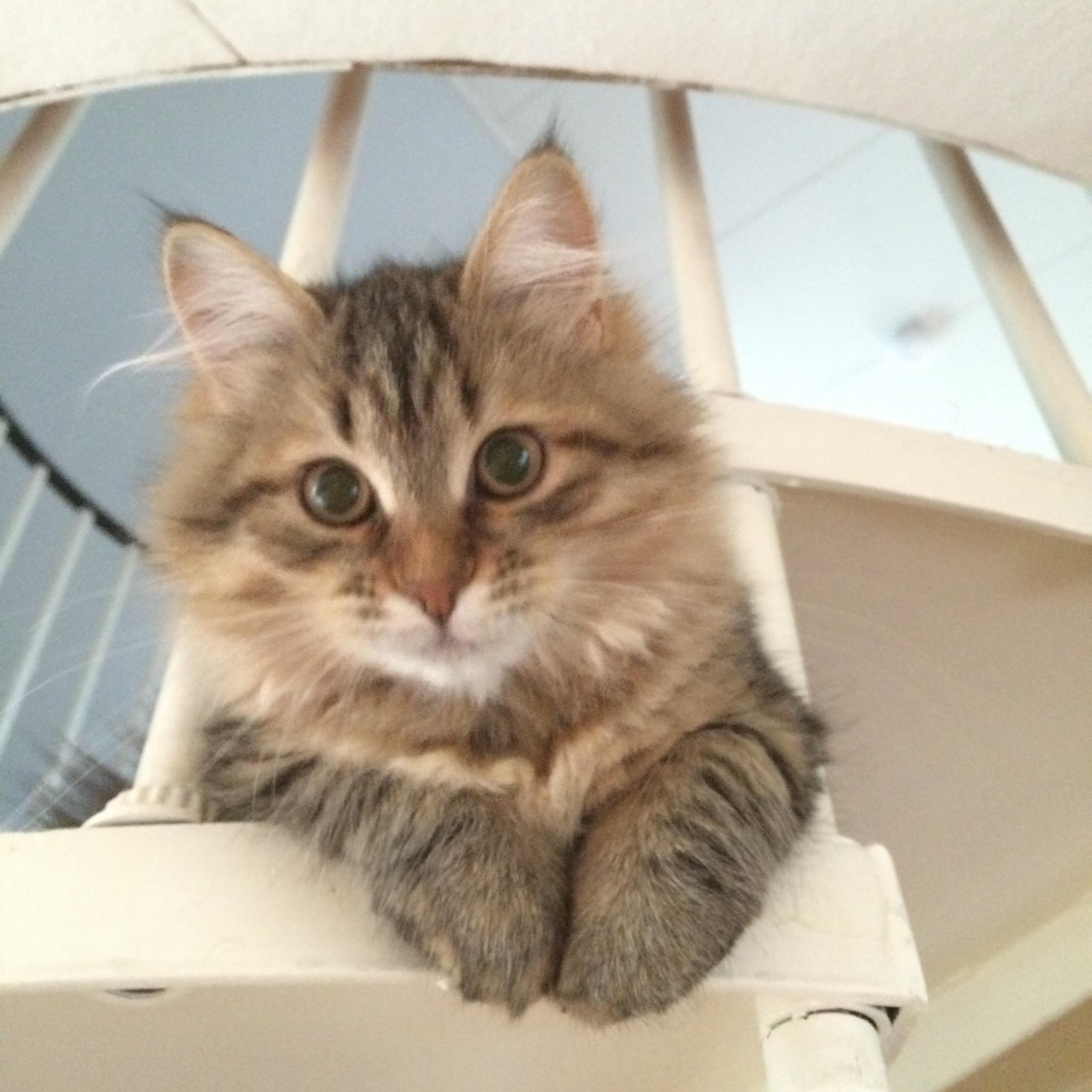 allergivänlig katt